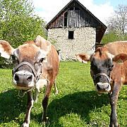 14 august data limita pentru cererile pentru finantarea fermelor de familie