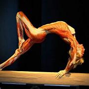 expozitia the human body vizitata de 88600 de persoane