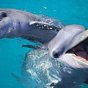 india numeste delfinii persoane non-umane
