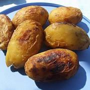 cartoful copt perfect