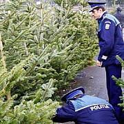 24000 de brazi confiscati de politisti