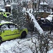 doua persoane ucise de caderea unui copac