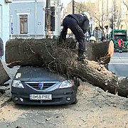 copac cazut peste o masina trafic blocat