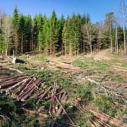 900 de hectare de padure din arges rase de pe fata pamantului