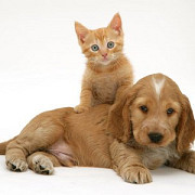 4 octombrie - ziua internationala a animalelor