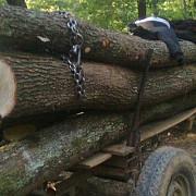 prinsi la taiat de copaci