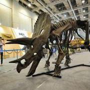un schelet gigant de dinozaur scos la licitatie in marea britanie