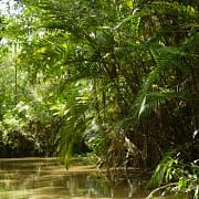 390 de miliarde de arbori din 16000 de specii in padurea amazoniana