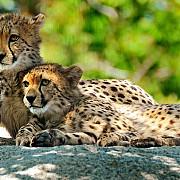 costa rica inchide gradinile zoologice si elibereaza animalele