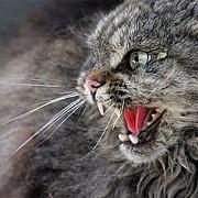 plopeniul in carantina din cauza unei pisici turbate