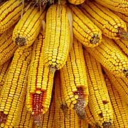 toamna a venit cu furturi de produse agricole