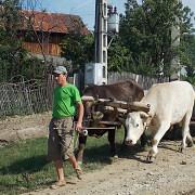 70000 de euro de la stat pentru tinerii care isi deschid afaceri in mediul rural