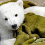 zoo berlin castiga un proces pentru drepturi de autor legate de ursuletul knut