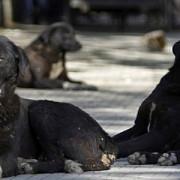 dosar penal pentru o iubitoare de animale