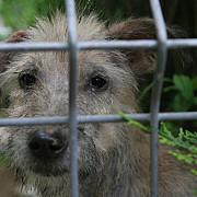 consiliul local a dat liber pentru adoptia cainilor de la distanta
