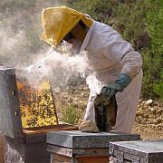 apicultorii nu mai pot accesa fonduri europene din cauza plafonului ridicat