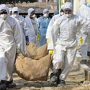 alerta de gripa aviara peste 100000 de pasari sacrificate
