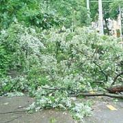 un copac a cazut peste o masina in capitala din cauza vantului puternic