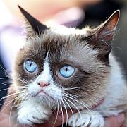 grumpy cea mai valoroasa pisica din lume