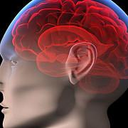 ibm a creat un cip a carui functionare seamana cu activitatea creierului uman