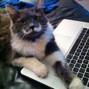 hamilton- cel mai frumos motan de pe internet
