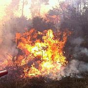 incendii devastatoare in australia