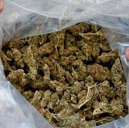 doua tone de marijuana au fost confiscate in albania