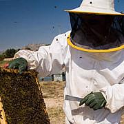 veste buna pentru apicultorii romani