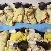 mor liliecii de caldura in australia