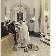 un caine merge saptamanal la biserica