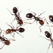 furnici trimise in spatiul cosmic de nasa