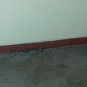 panica in centrul ploiestiului un sarpe descoperit in scara unui bloc