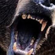 femeie atacata de urs la maguriracatau in judetul cluj