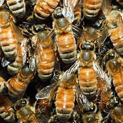 la valea calugareasca s-au furat si albinele