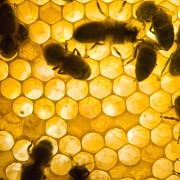 productia de miere afectata de vremea capricioasa
