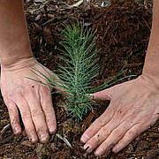 aproape 30000 de hectare de teren ar putea fi impadurite anul acesta