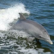 rusia a preluat controlul asupra delfinilor ucigasi ucrainieni