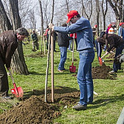 plantare de arbori in cartierul lamaita