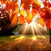 vreme frumoasa pana pe 16 noiembrie maxime de peste 20 de grade celsius