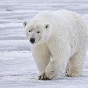 zeci de specii de animale protejate prin conventia de la bonn