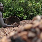 preturile la ciocolata ar putea exploda din cauza epidemiei de ebola