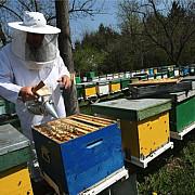 apicultorii vor primi 4 milioane de lei compensatie pentru o parte din pierderi