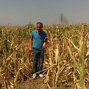 seceta pune agricultura la pamant producatorii vor sa dea in judecata anm pentru prognoze meteo gresite