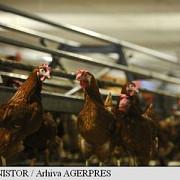 crescatorii de pasari din romania solicita eliminarea taxelor de raft pentru producatori in perioadele de criza
