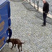 alerta terorista in germania politia a decis anularea celui mai mare carnaval
