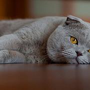expozitie mondiala de pisici la castelul bran