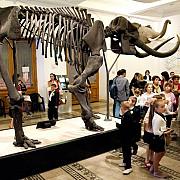 copiii asteptati sa petreaca o noapte printre cele mai mari mamifere de pe pamant la muzeul antipa