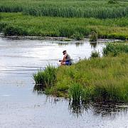 delta carpatilor este in pericol