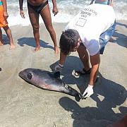 delfini morti din cauza plaselor de peste
