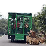 o gradina zoologica inedita